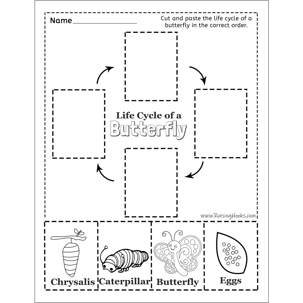 Life Cycle of a Butterfly Worksheet - Raising Hooks