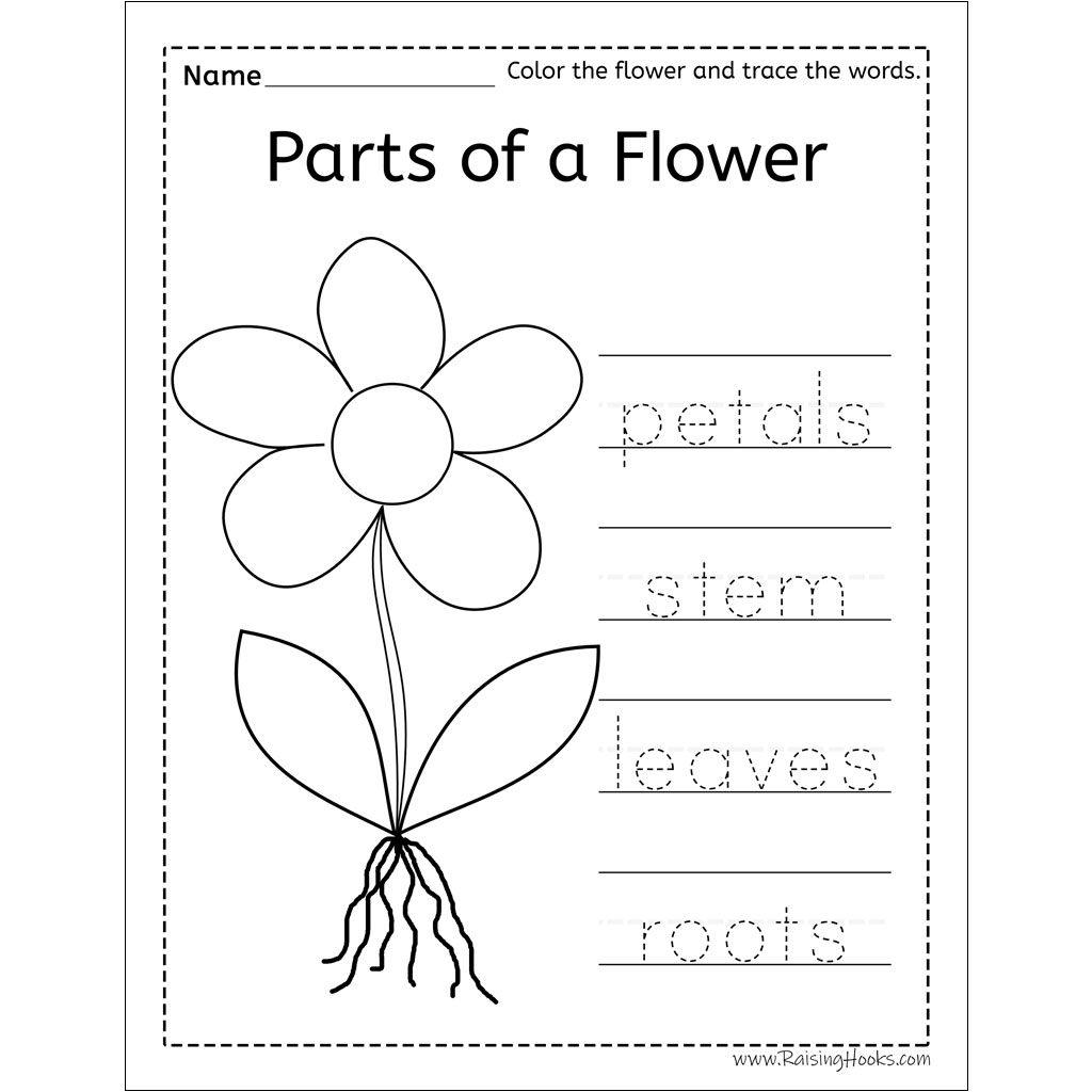 Flower Arranging Sensory Bin   Raising Hooks